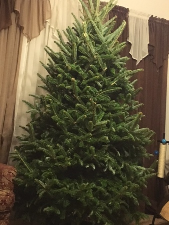 2016-christmas-treeimg_1937